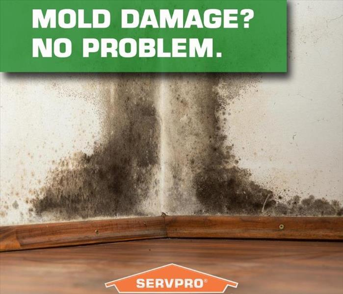 Mold Remediation Connecticut Residents:  Follow These Mold Safety Tips If You Suspect Mold